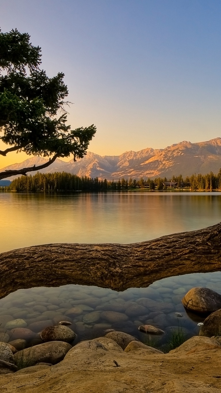 768x1366 Nature, lakes, tree