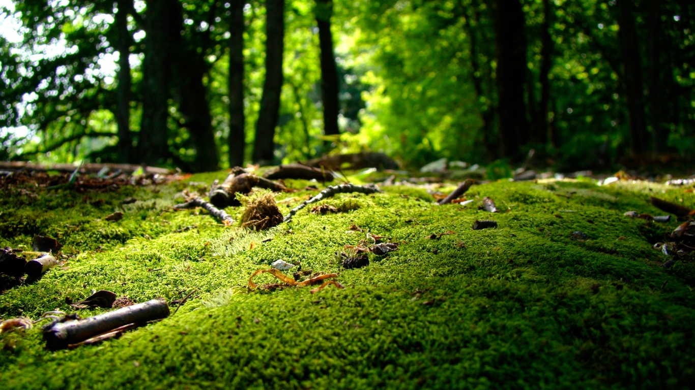Nature Wallpaper 1366x768 x Nature