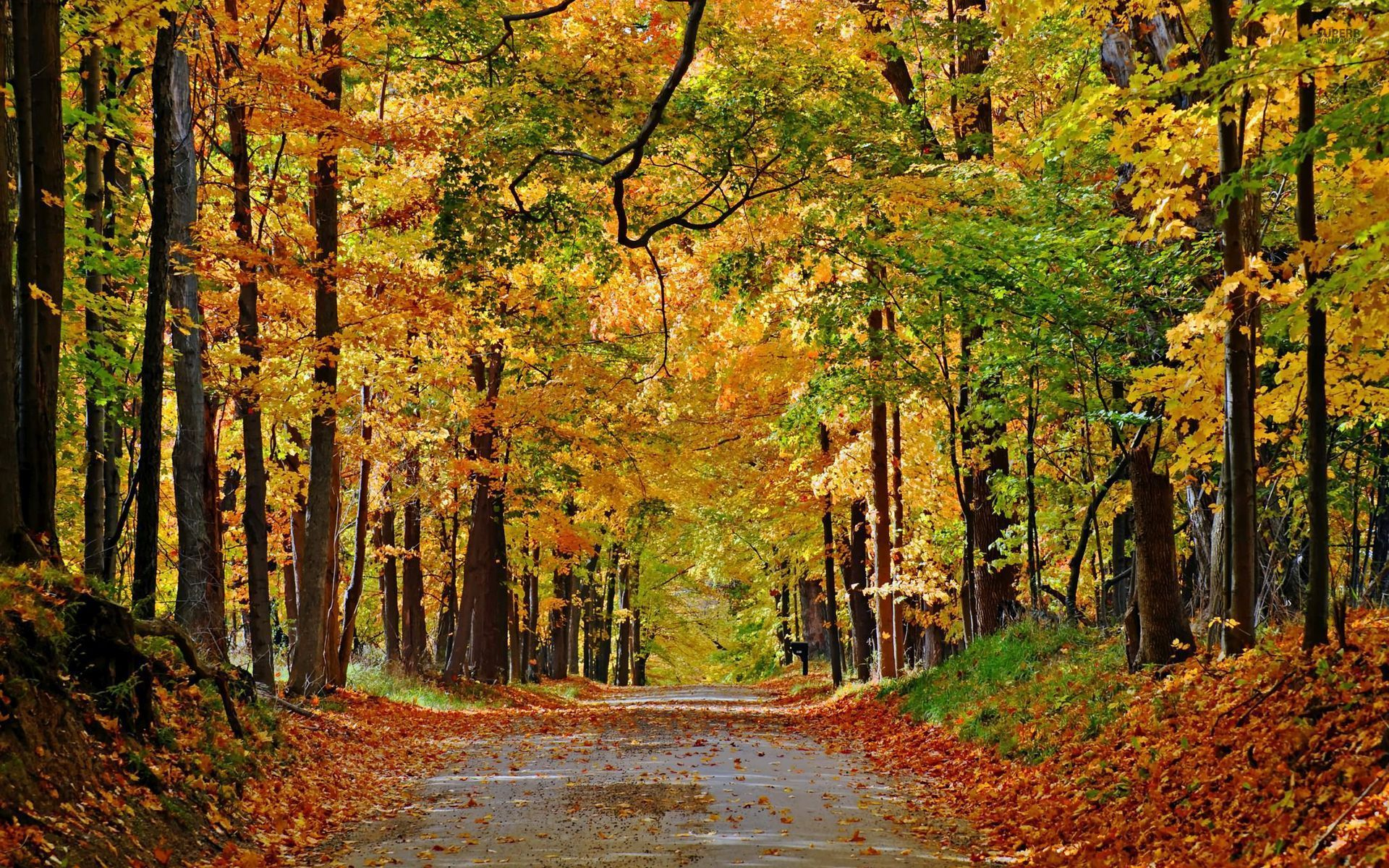 Nice Autumn Forest Path Leaves Wallpapers