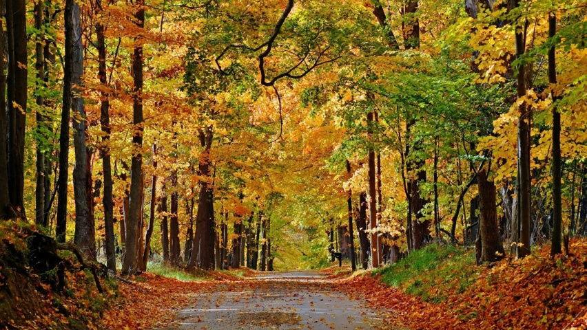 825x315 Nice Autumn Forest Path Leaves Facebook Cover Photo