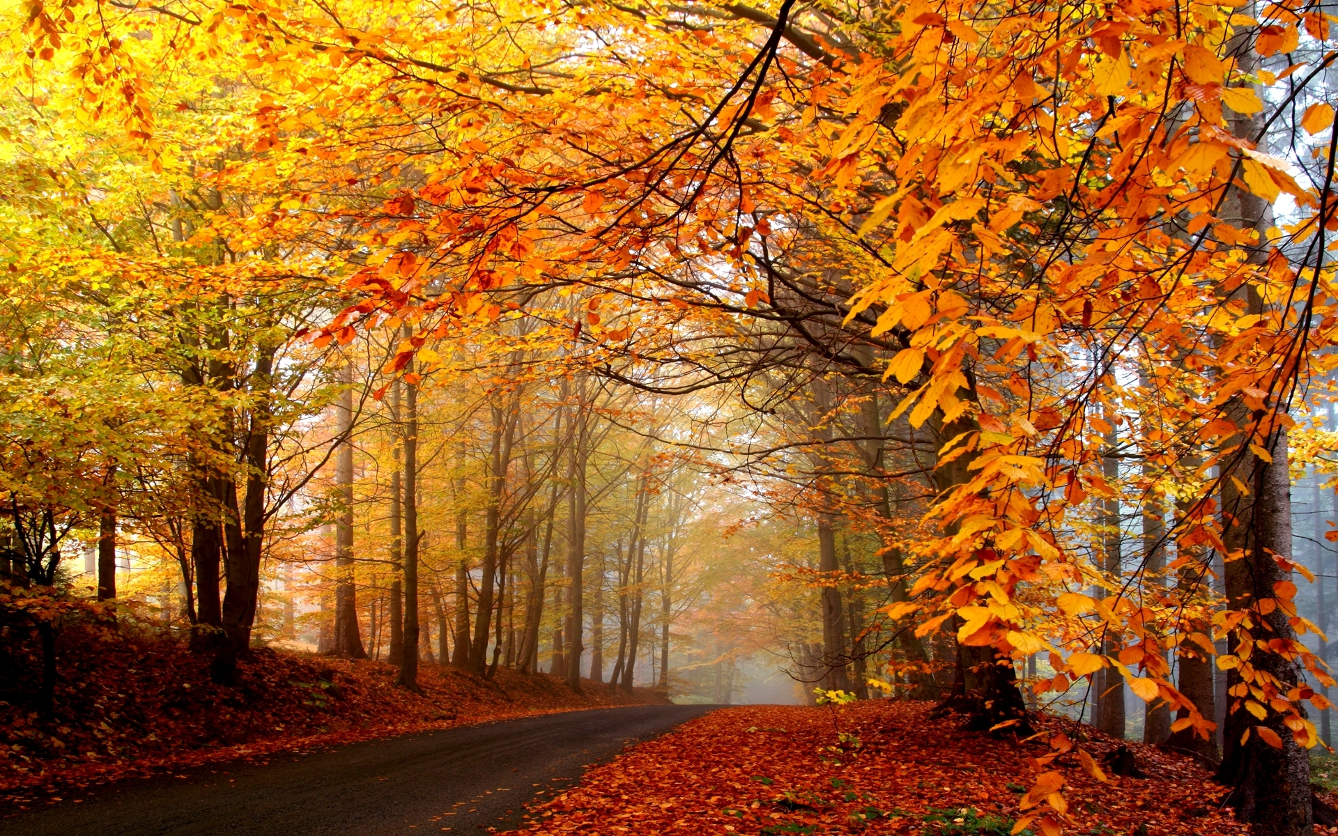Nice Autumn Forest Way Foliage Wallpapers