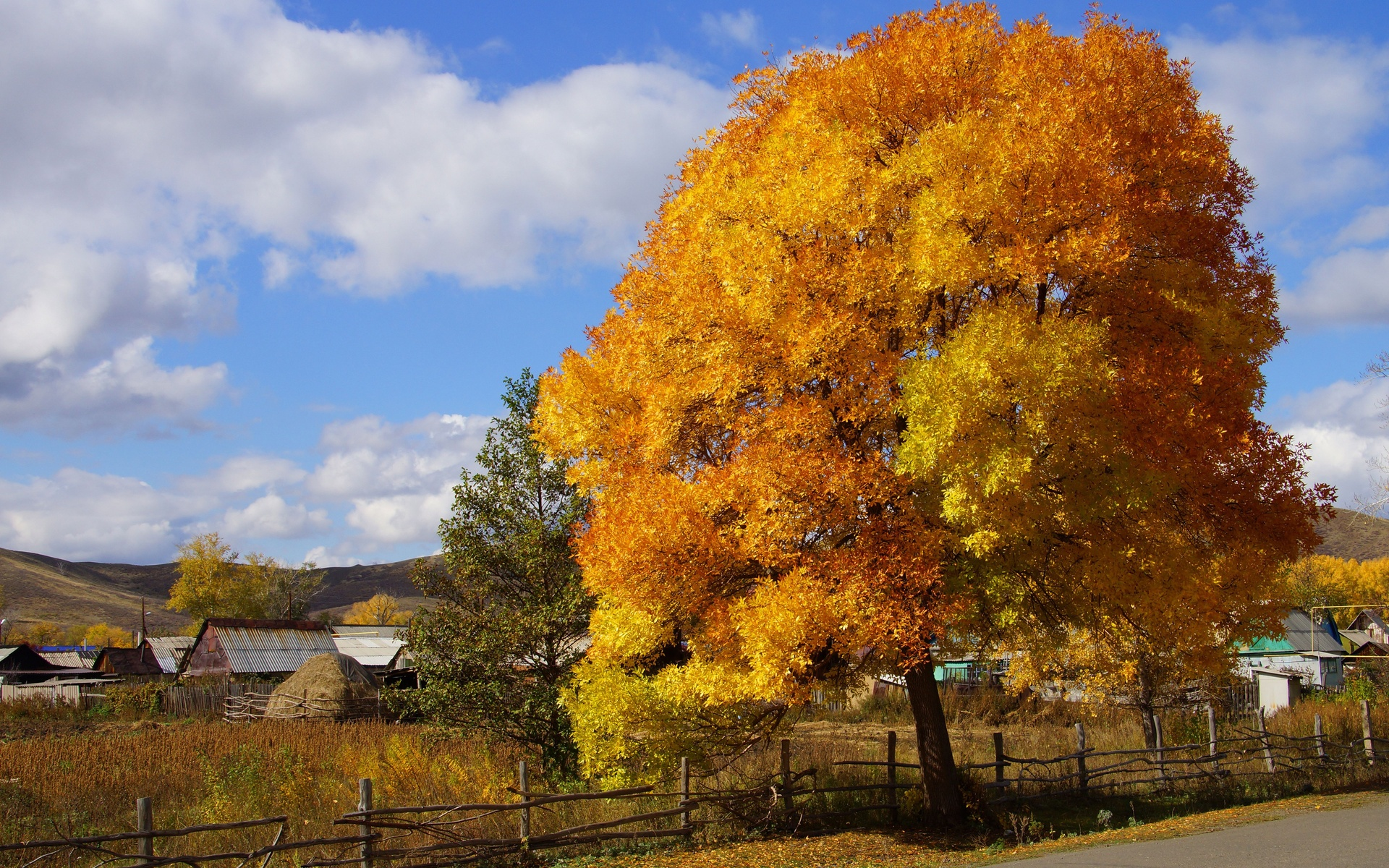 Nice Autumn Tree Rustic Fences Wallpapers