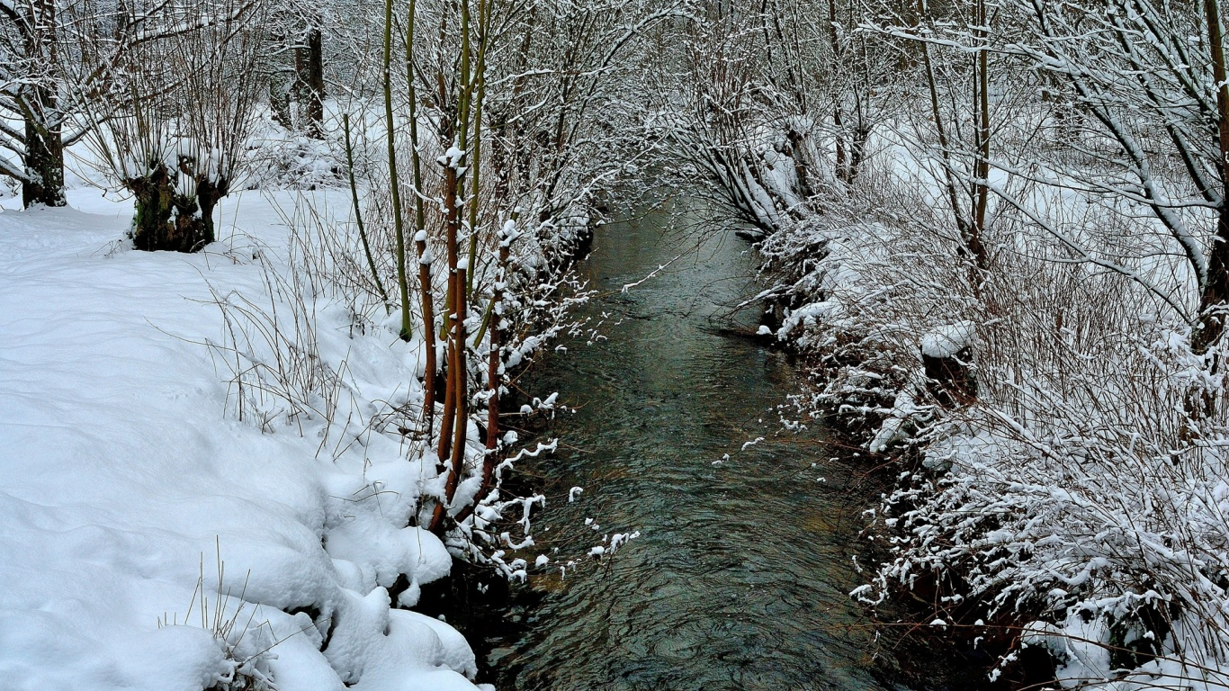 1366x768 Nice Calm Creek Snow Plants