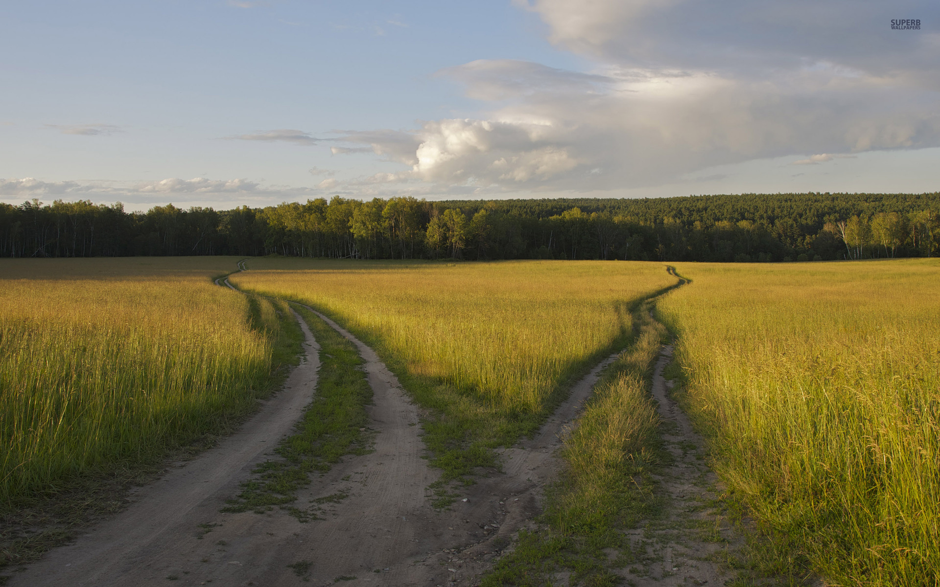 Nice Paths Wheat Field Forest Wallpapers Nice Paths