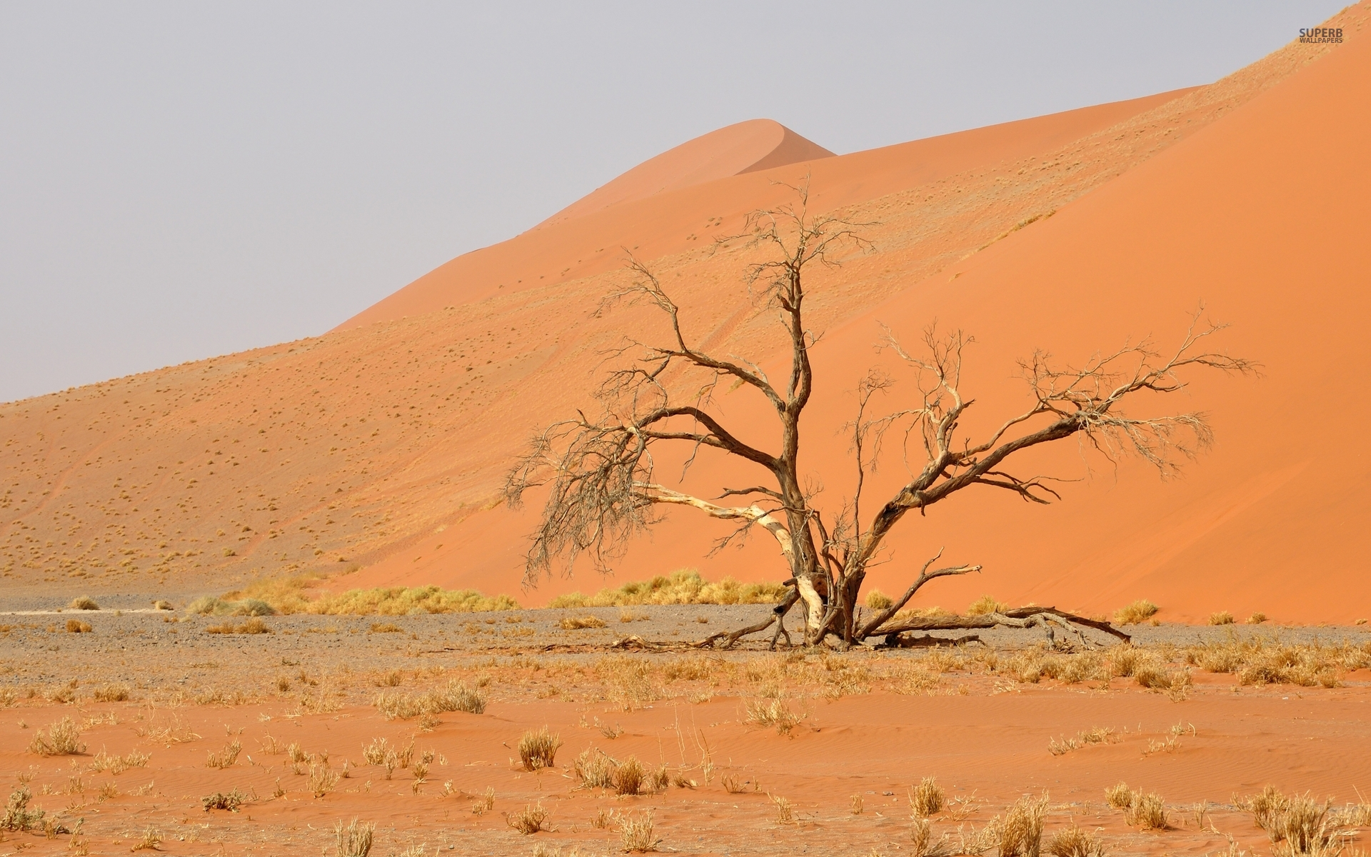 Nice Tree Namib Desert Africa Wallpapers X furthermore Easy Swiss Roll in addition D Winter Africa Csc Copy additionally Namib Desert moreover Lg American Desert. on image d