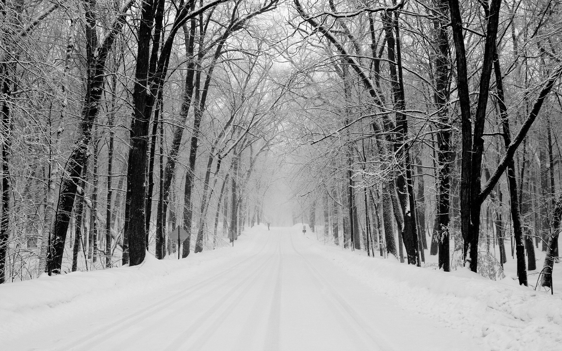 Nice winter forest path wallpapers nice winter forest - Snowy wallpaper ...