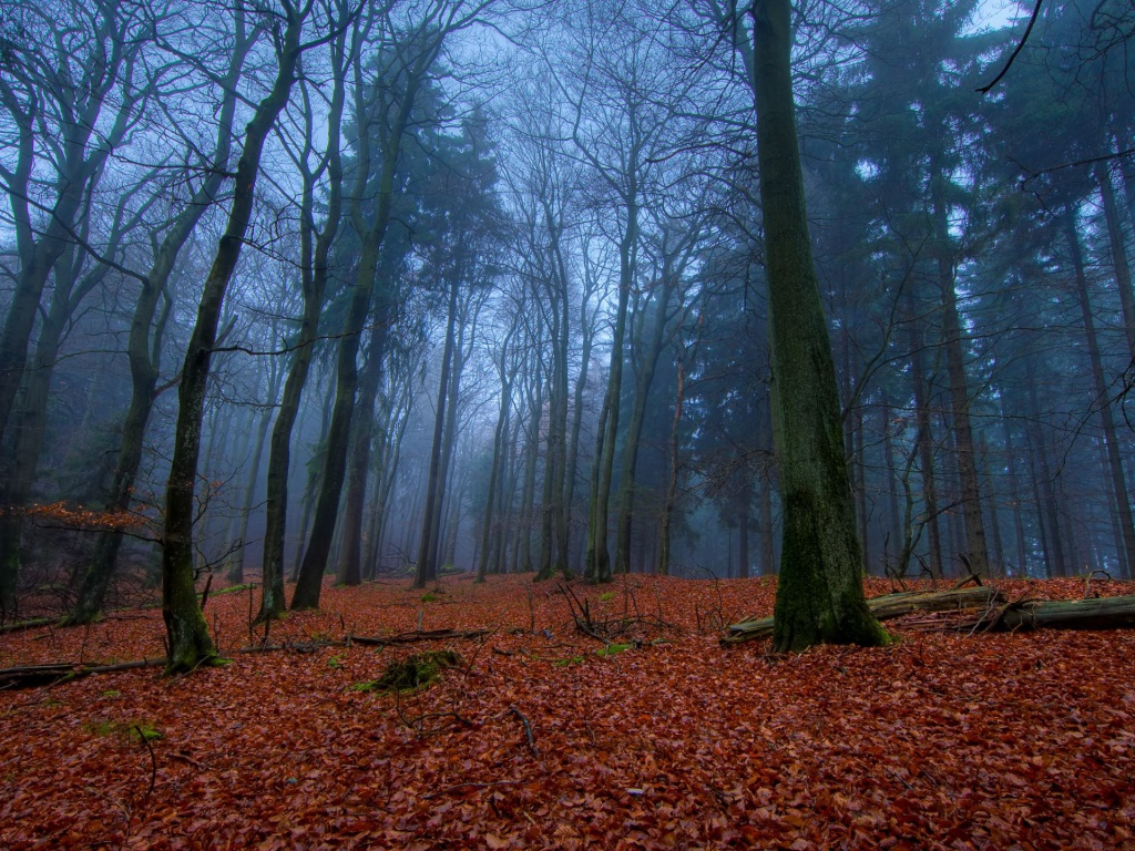 1024x768 November In Forest Desktop Pc And Mac Wallpaper
