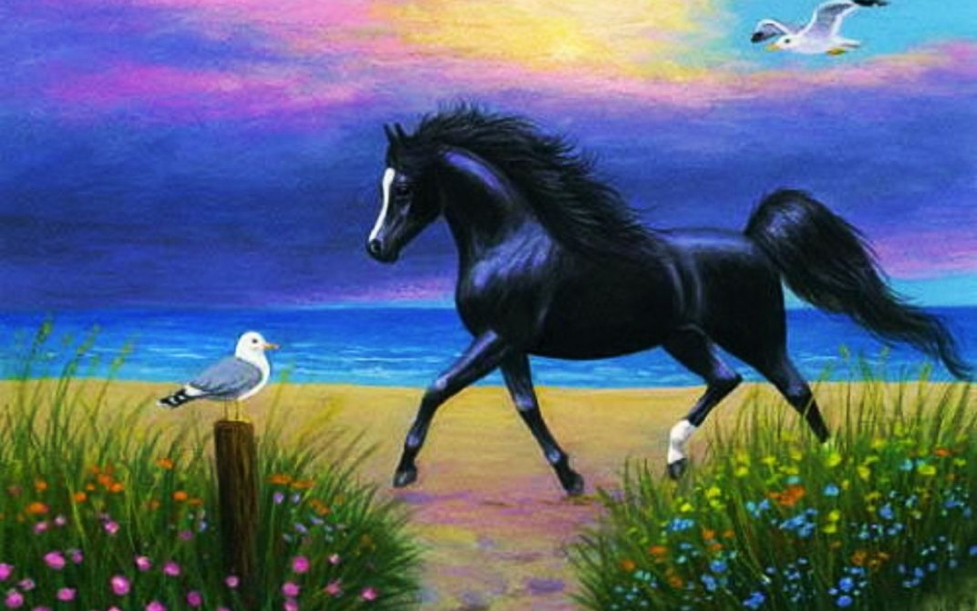 Image Ocean Beach Black Horse Birds Wallpapers And Stock Photos
