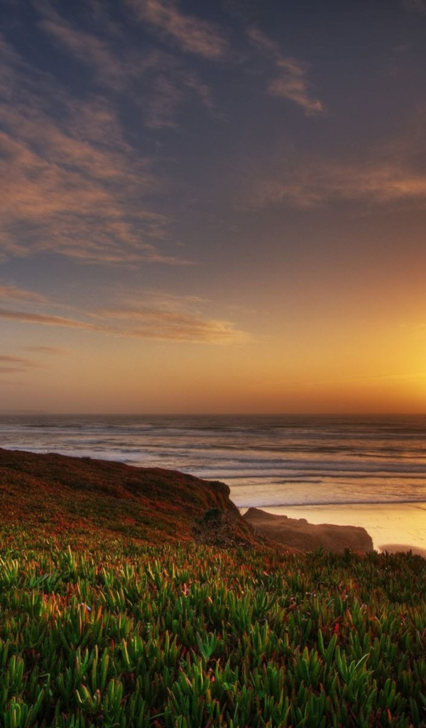 600x1024 Ocean Coast Plant Great Sunset Galaxy tab 2 wallpaper