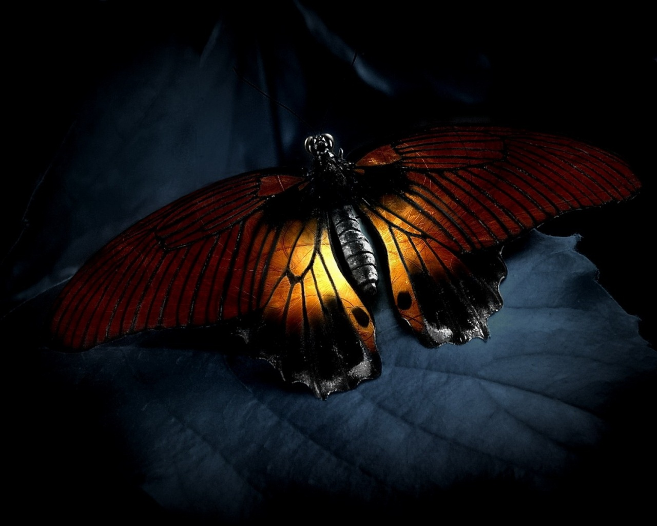 Aninimal Book: Orange butterfly wallpapers   Orange butterfly stock photos