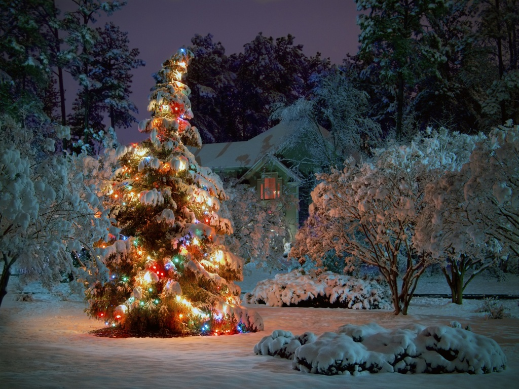 1024x768 Outdoor Christmas tree desktop PC and Mac wallpaper