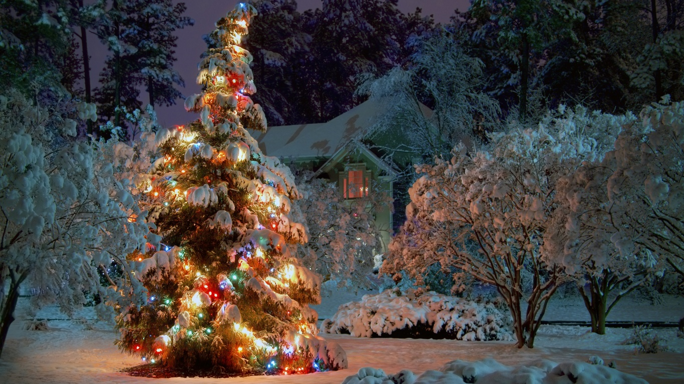 1366x768 outdoor christmas tree desktop pc and mac wallpaper