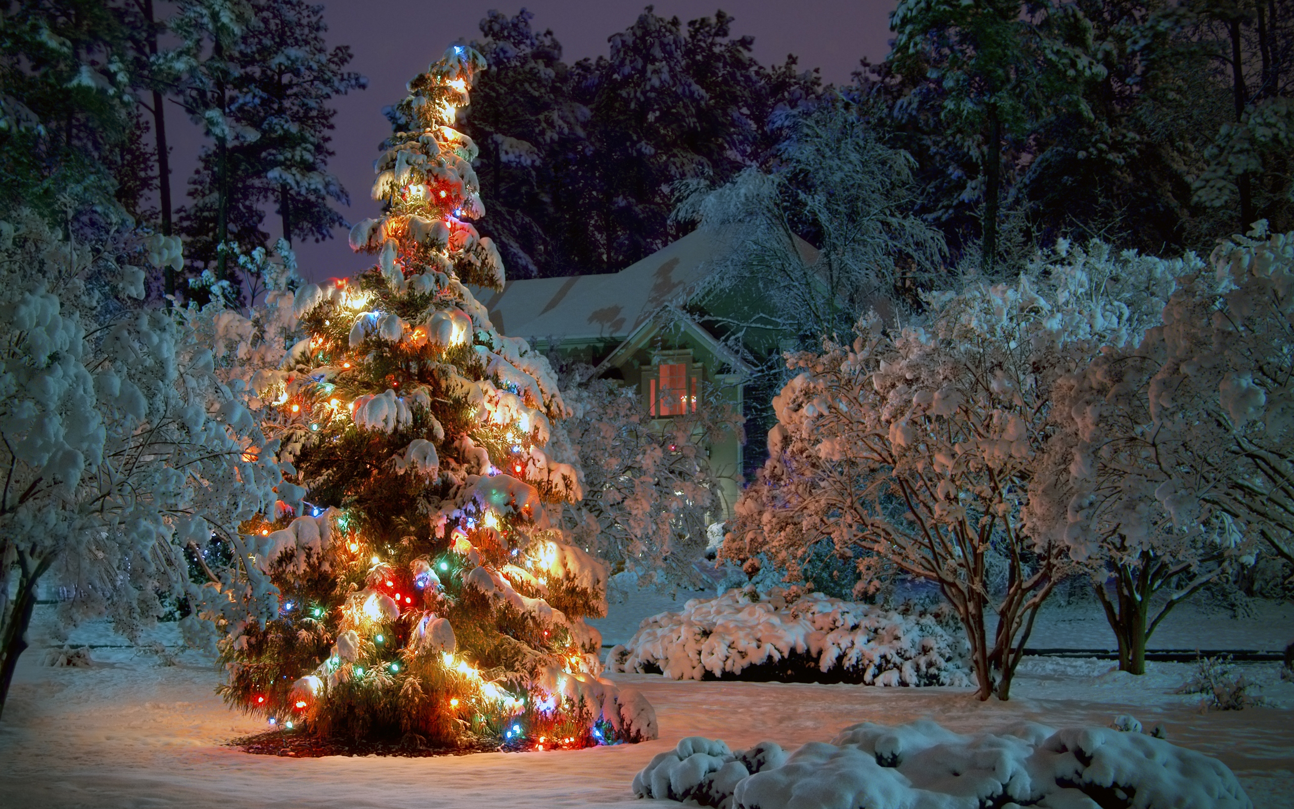 2560x1600 Outdoor Christmas tree desktop PC and Mac wallpaper