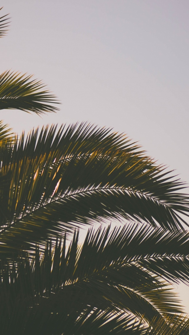 palm tree wallpapers for iphone