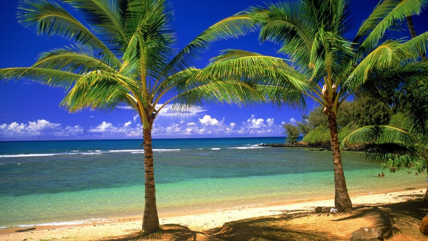852x480 Palms on the beach