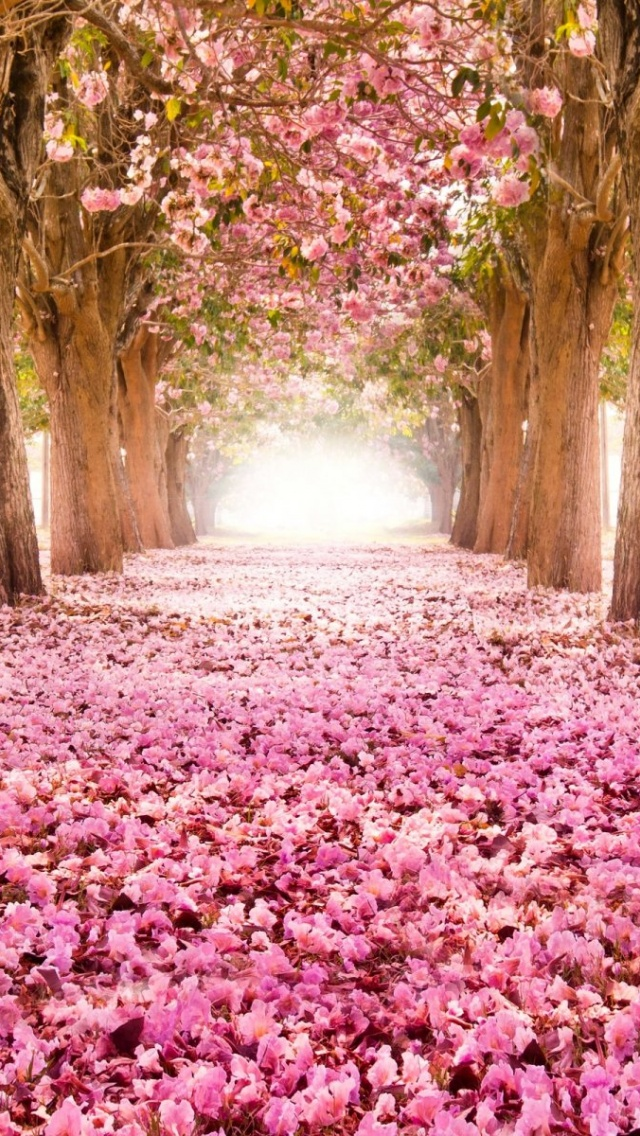 640x1136 Park Road Sakura Alley Iphone 5 Wallpaper