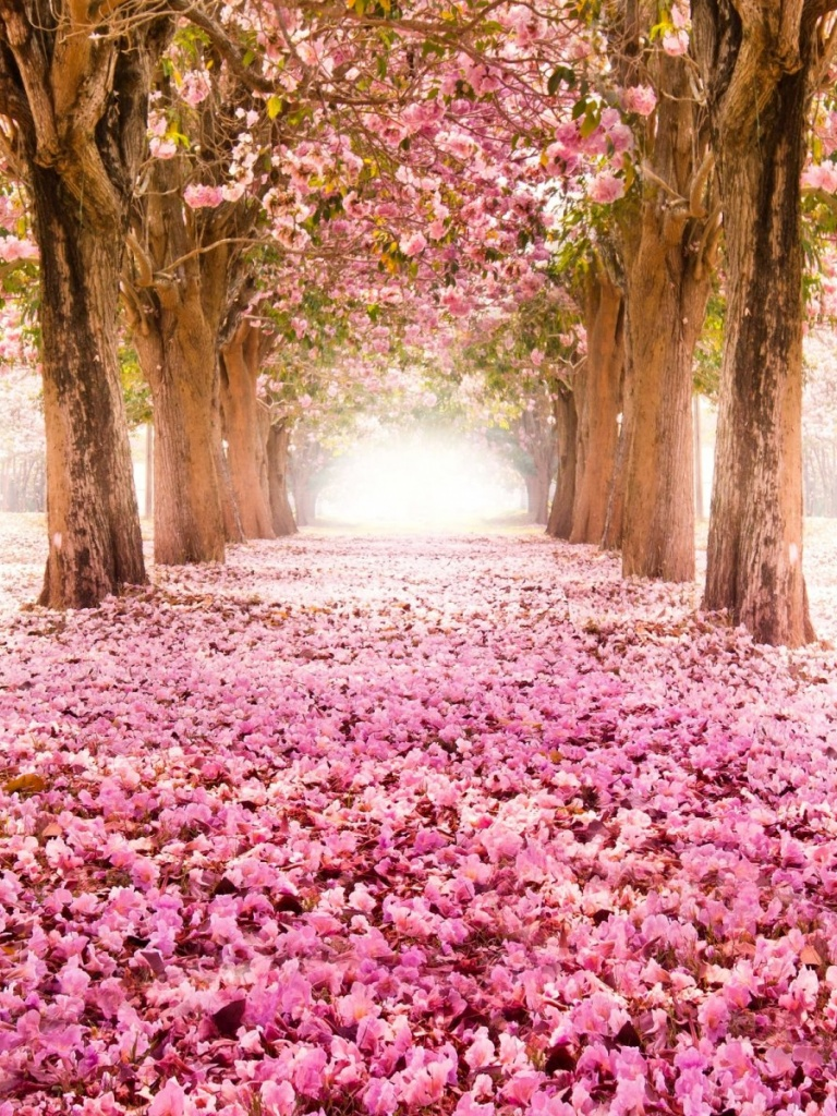 768x1024 Park Road Sakura Alley Ipad Mini Wallpaper