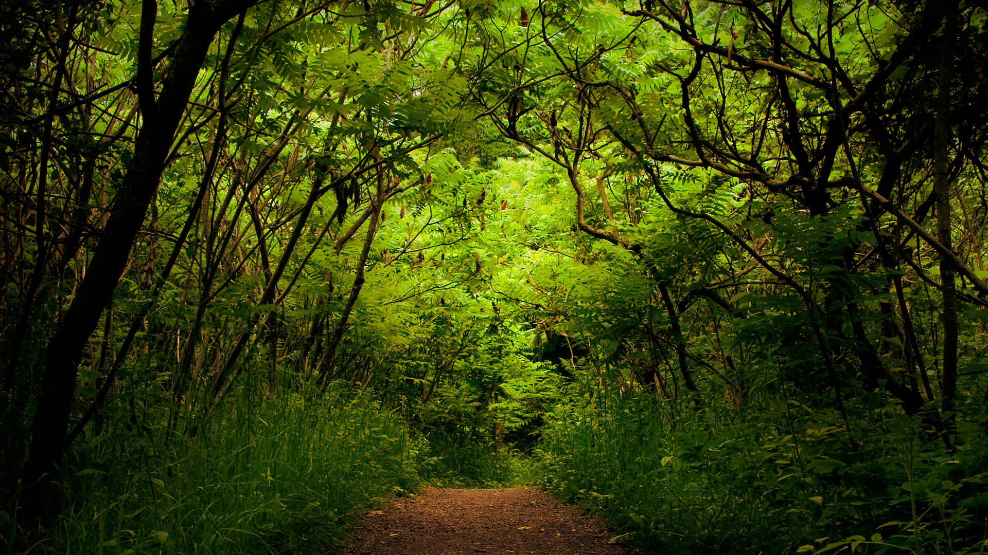 1920x1080 Path In The Forest Tree Nature Desktop Pc And