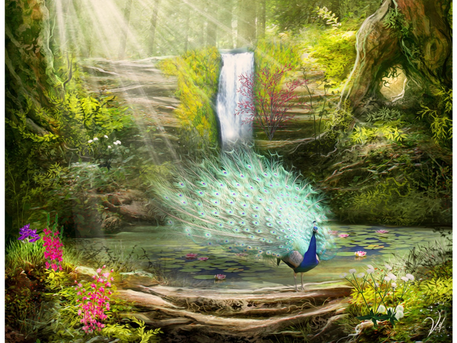 Peacock & Lovely Place Wallpapers