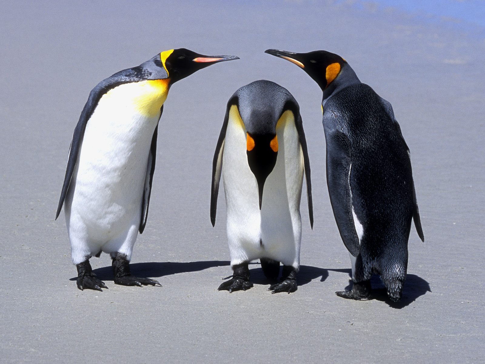 1500x500 Penguins Meeting