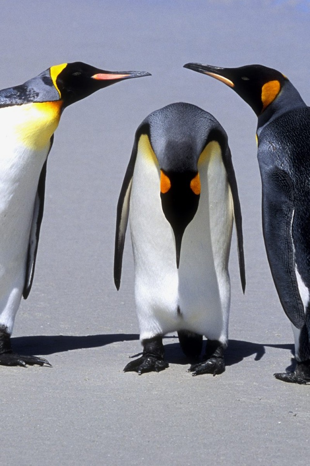 640x960 Penguins Meeting