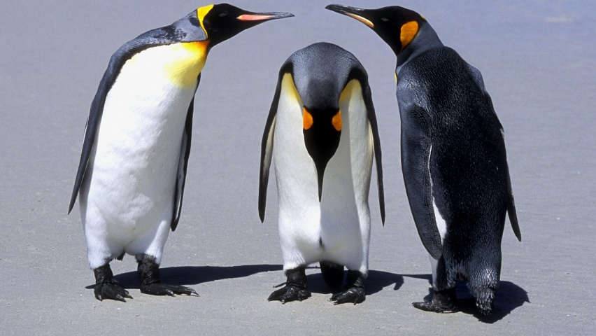 646x220 Penguins Meeting