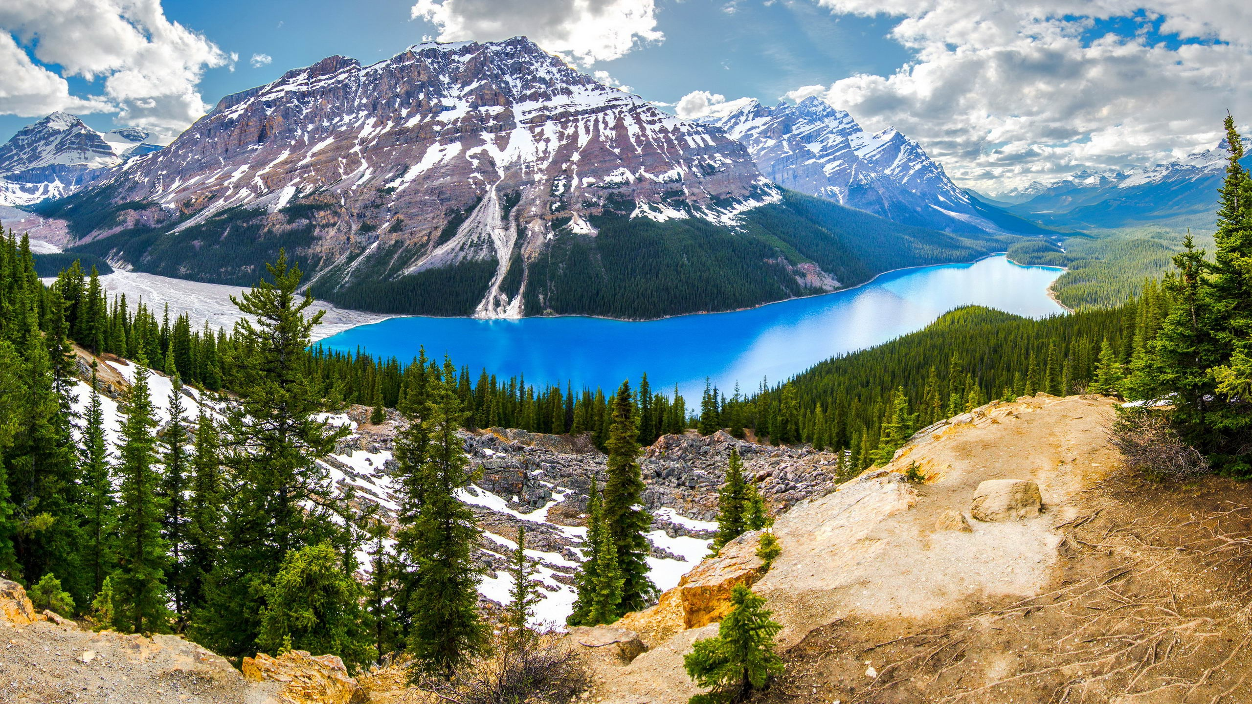 2560x1440 peyto lake banff canada firs desktop pc and mac for Home wallpaper canada