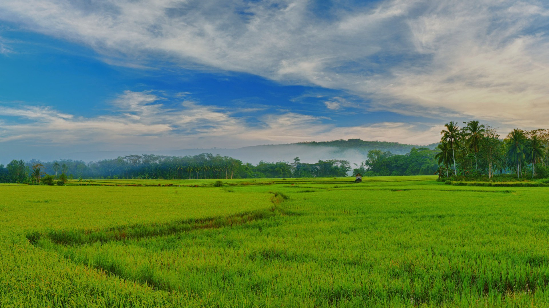 1920x1080 philippines paddy fields desktop pc and mac for Wallpaper home philippines