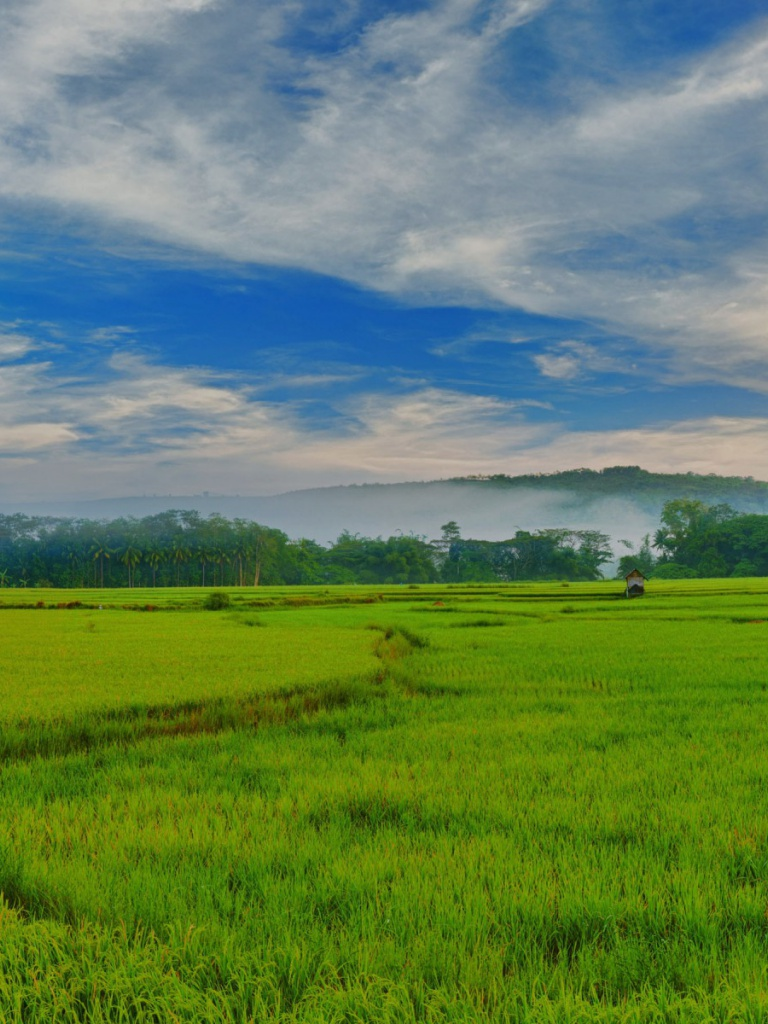 768x1024 philippines paddy fields ipad wallpaper for Wallpaper home philippines