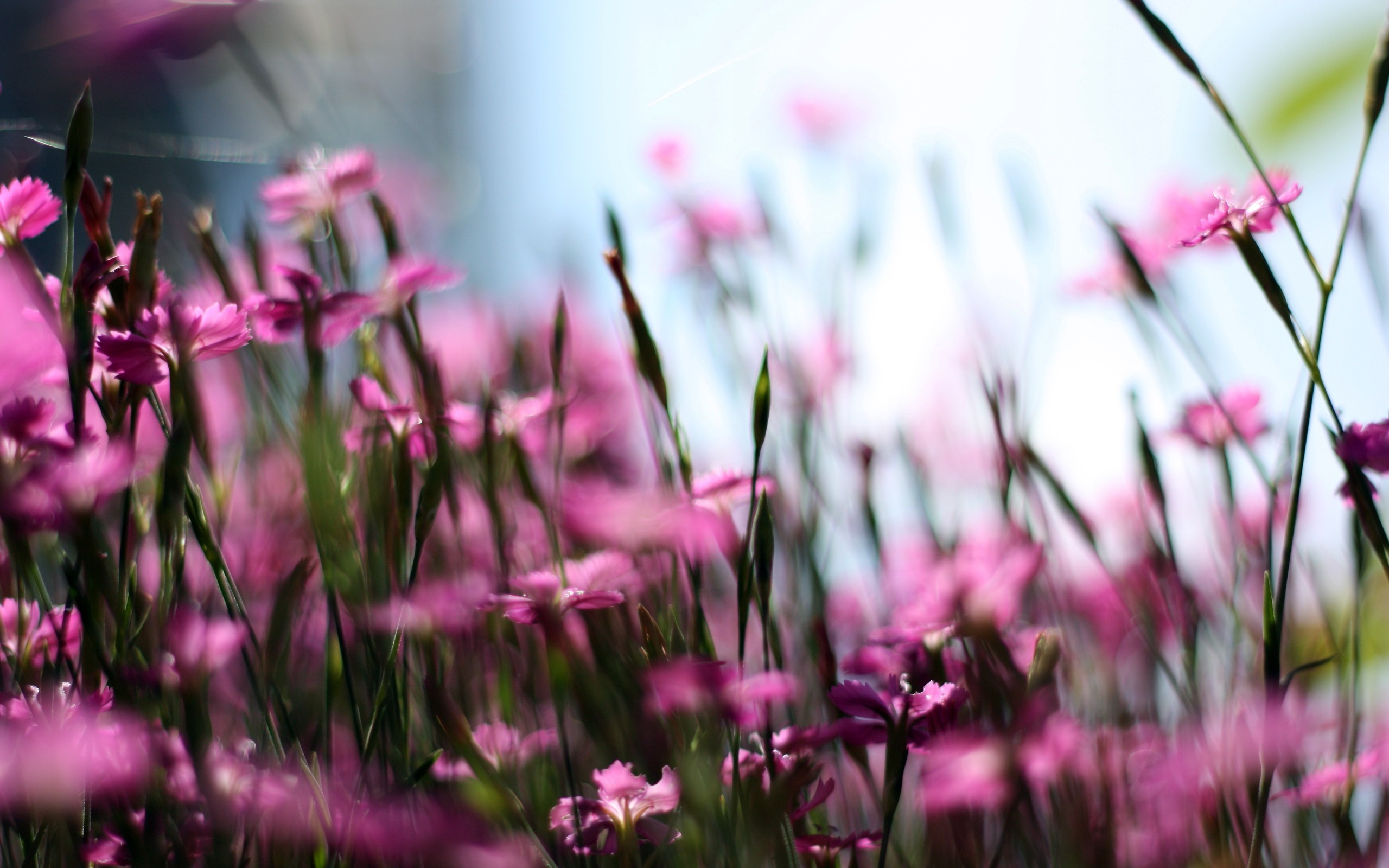 Pink Flowers - Withlovenregards