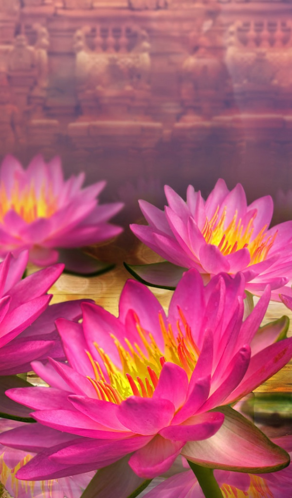 600x1024 pink lotus flowers galaxy tab 2 wallpaper mightylinksfo