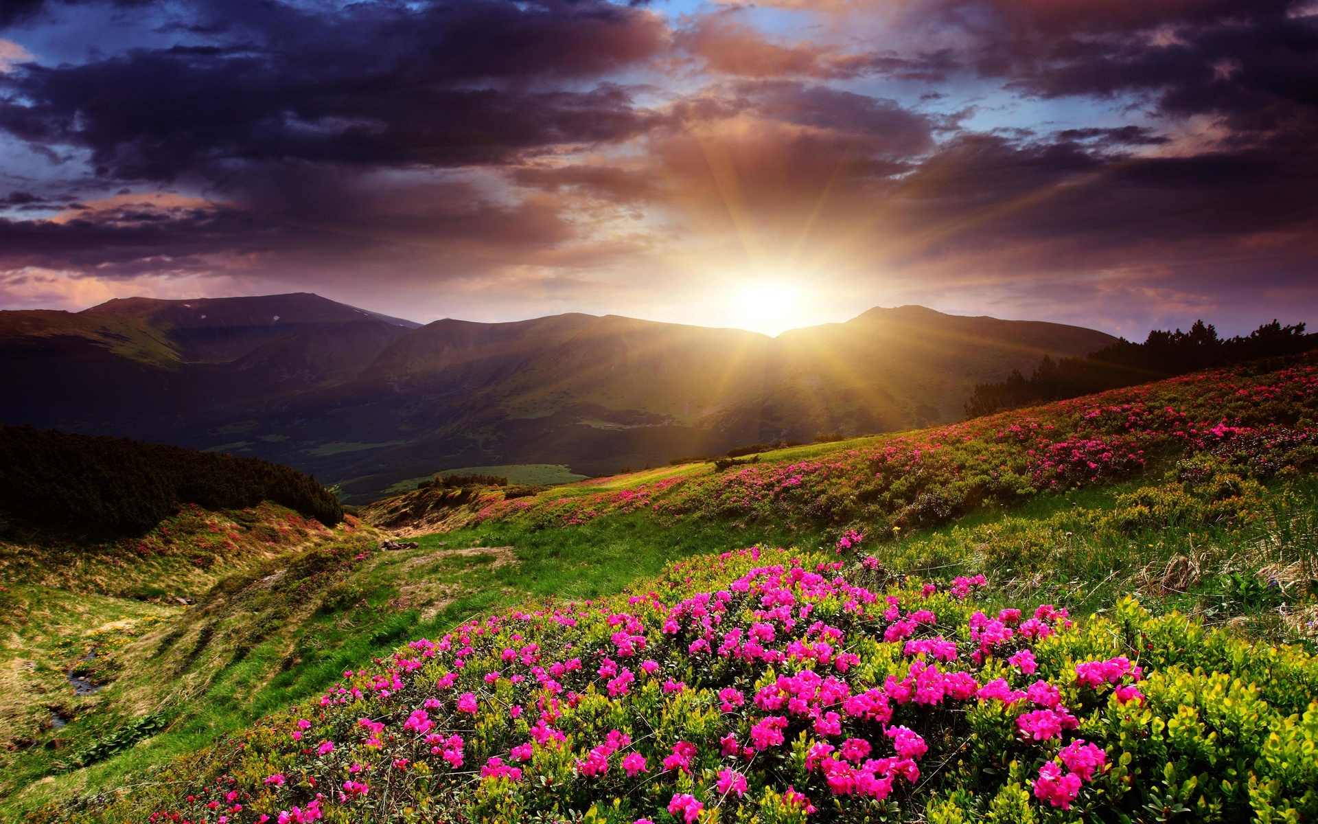 Image: Pink Mountain Flowers wallpapers and stock photos. «