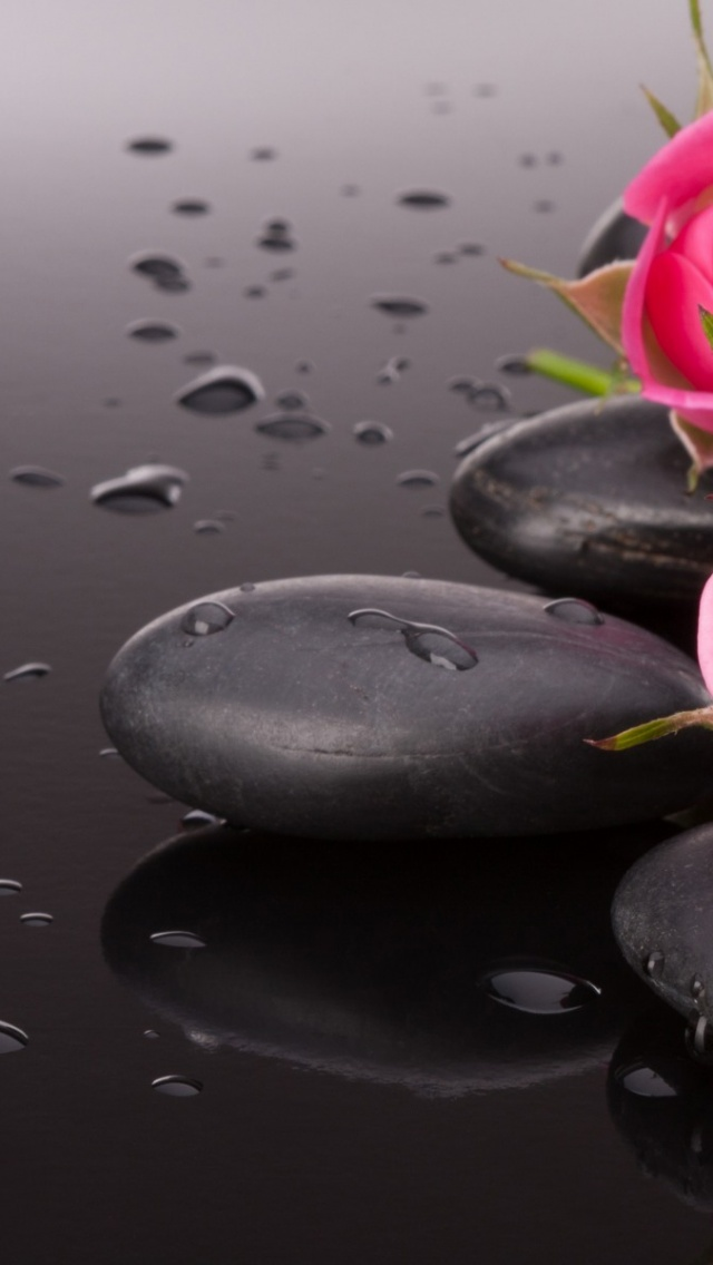 640x1136 Pink Roses & Black Pebbles