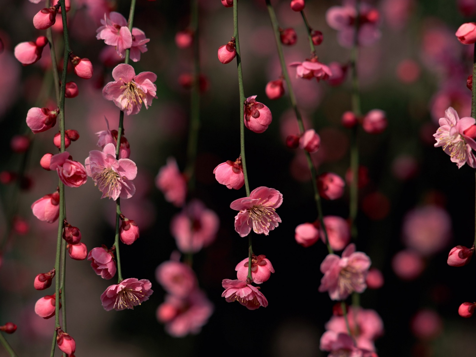 1500x500 Pink Spring Flowers Twitter Header Photo