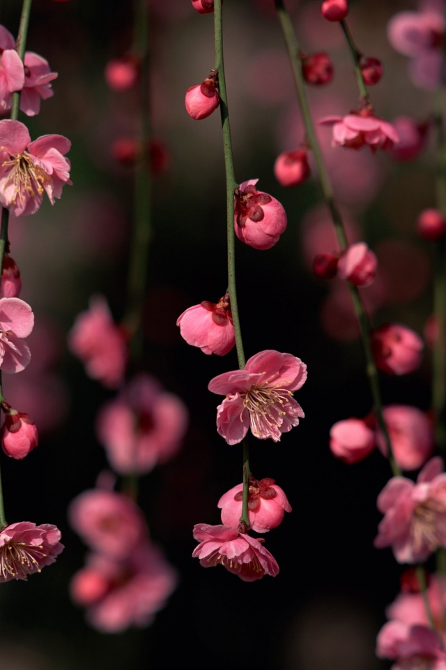 640x960 Pink Spring Flowers Iphone 4 Wallpaper