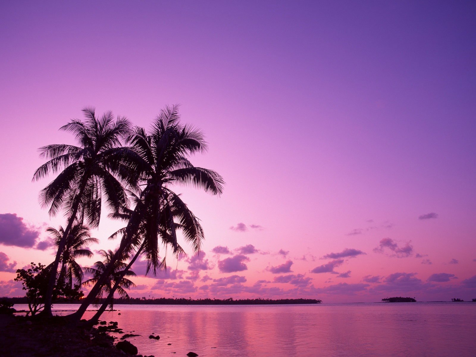 Image Pink Sunset Wallpapers And Stock Photos