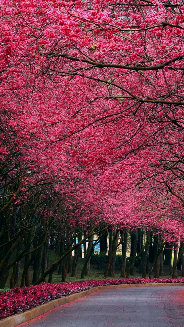 640x1136 Pink Trees Road Spring Time Iphone 5 Wallpaper