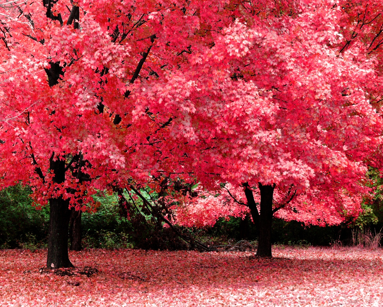 Featured Pink Trees Wallpapers