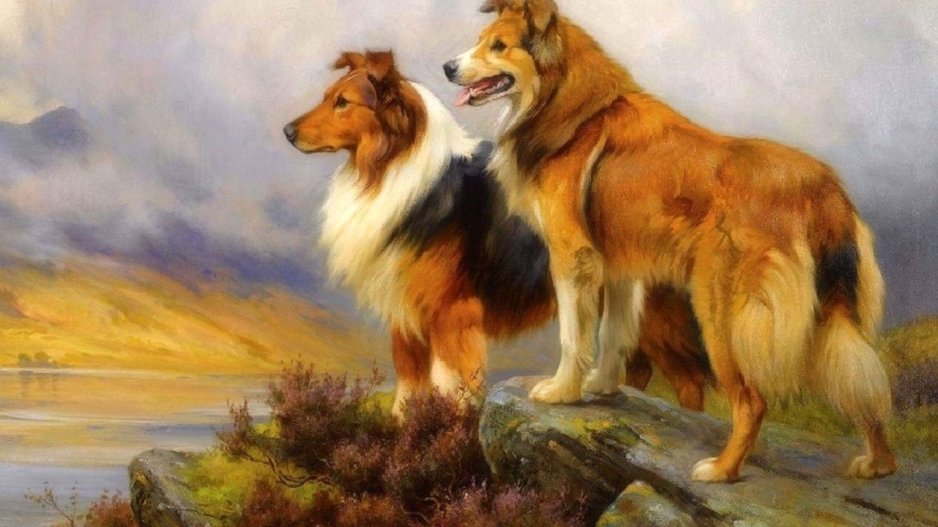 1920x1080 Pretty Collie Dogs Lookout Desktop Pc And Mac