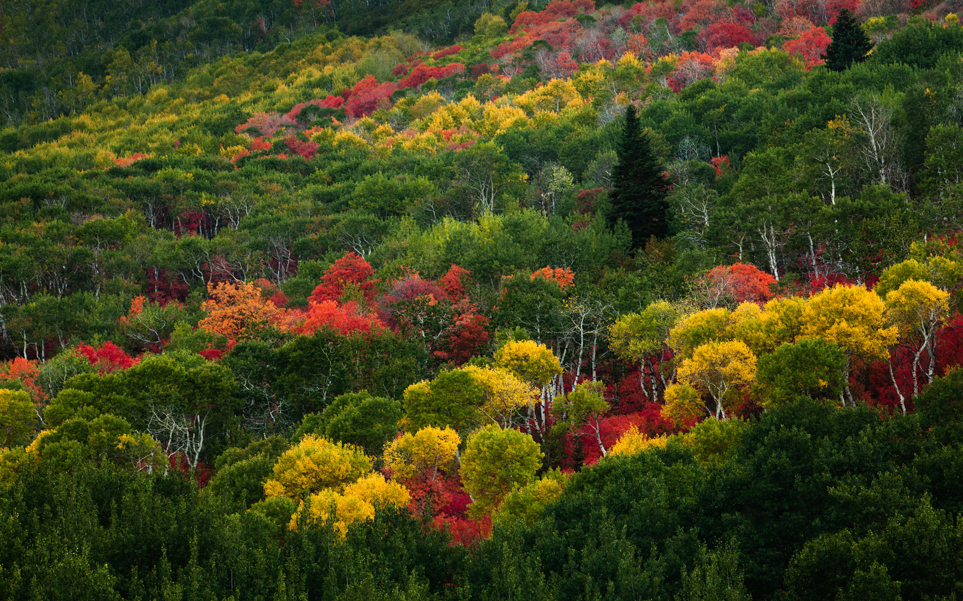 Pretty Colorful & Green Trees wallpapers | Pretty Colorful & Green ...
