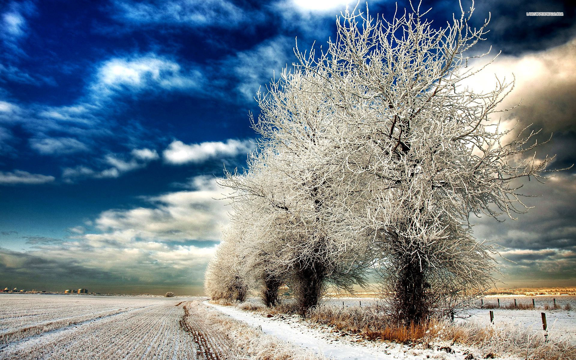 Pretty Winter Trees Field Snow Wallpapers And Stock Photos