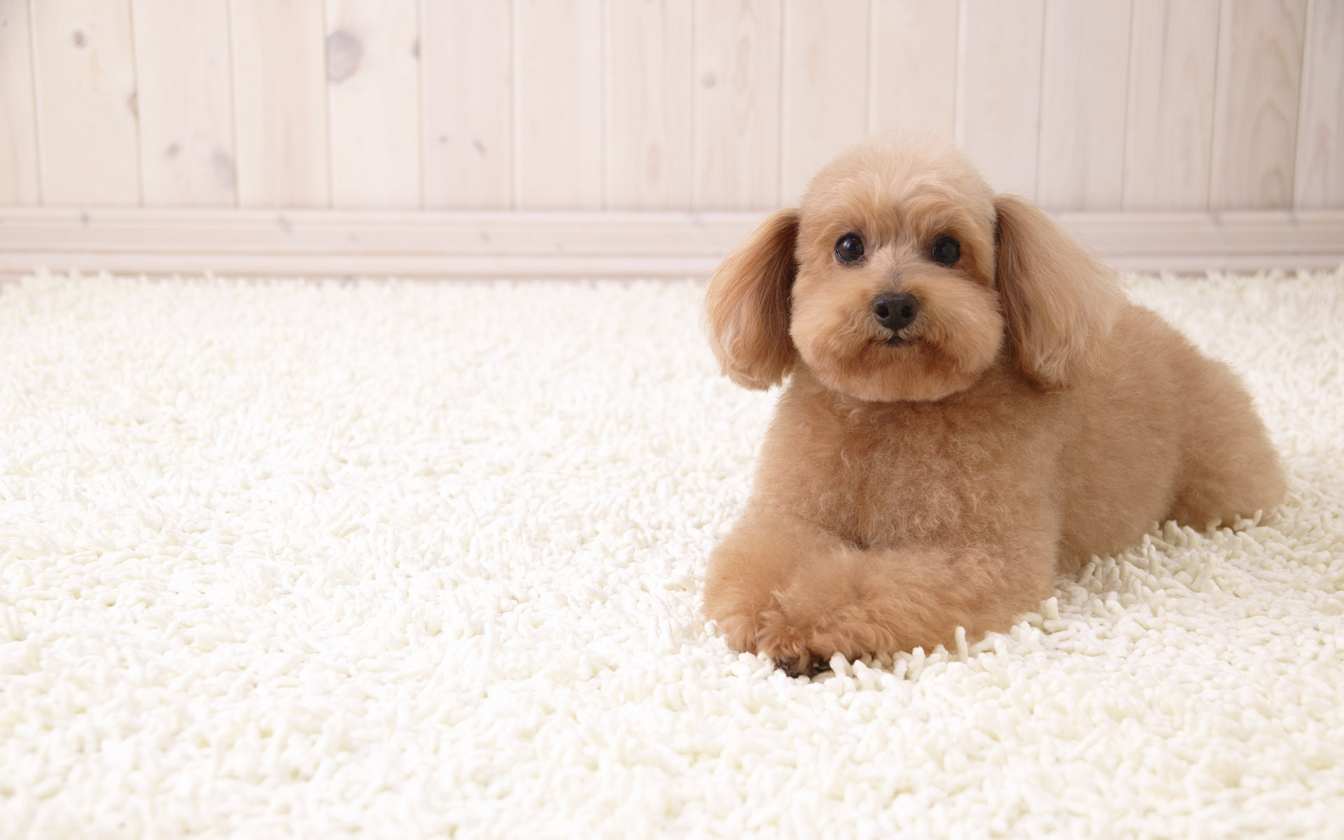 Puppy Dog Wallpapers Puppy Dog Stock Photos