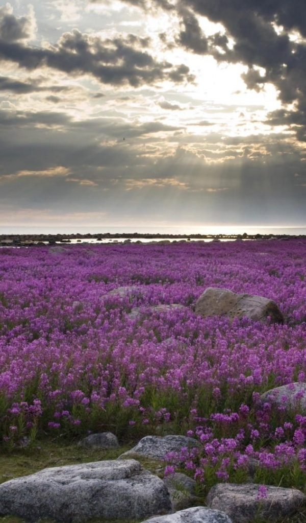 600x1024 Purple Flowers Stones & Sky