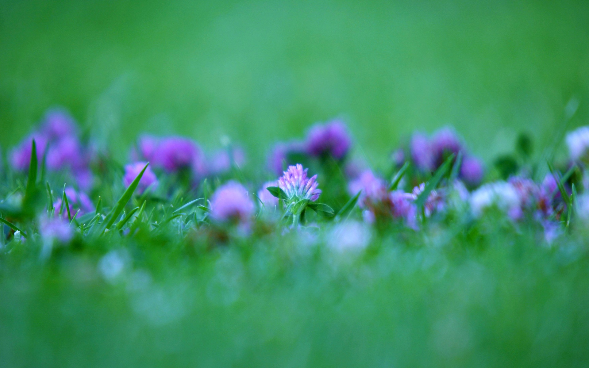 Green and Purple Abstract Flowers - Wallpaper #43436