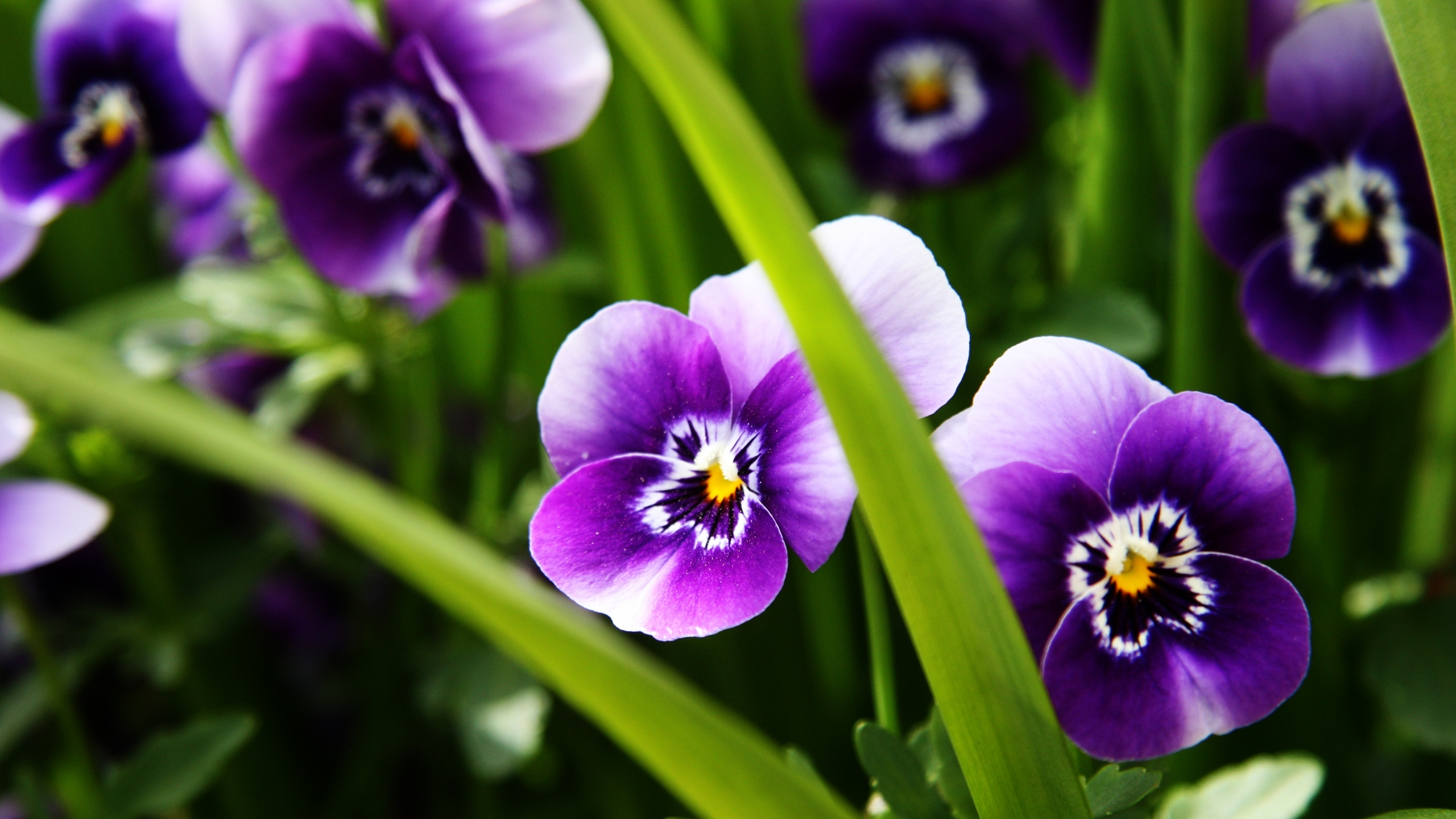 lavender flowers wallpapers 2560x1440 - photo #3