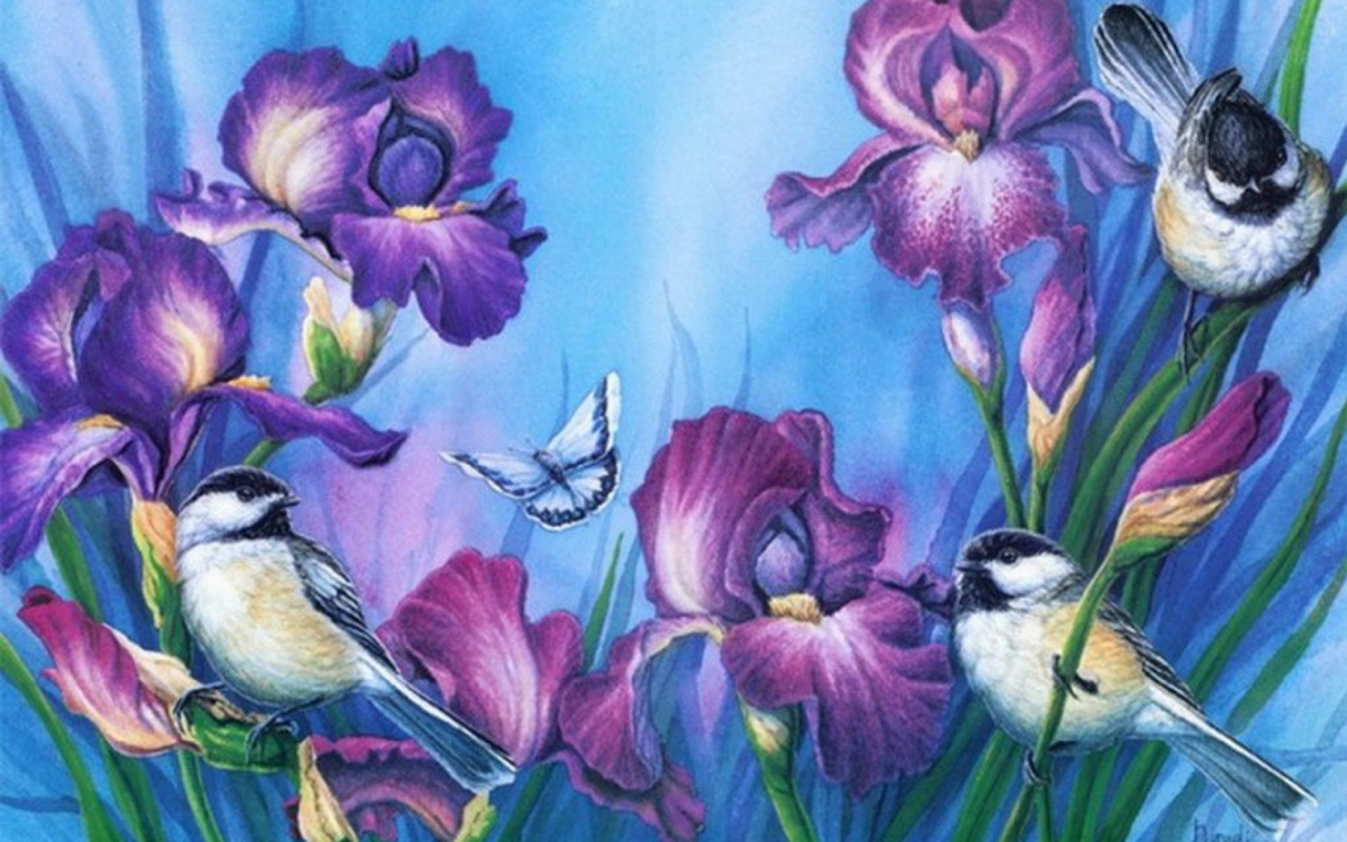 Purple Iris Amp Birds Wallpapers Purple Iris Amp Birds Stock