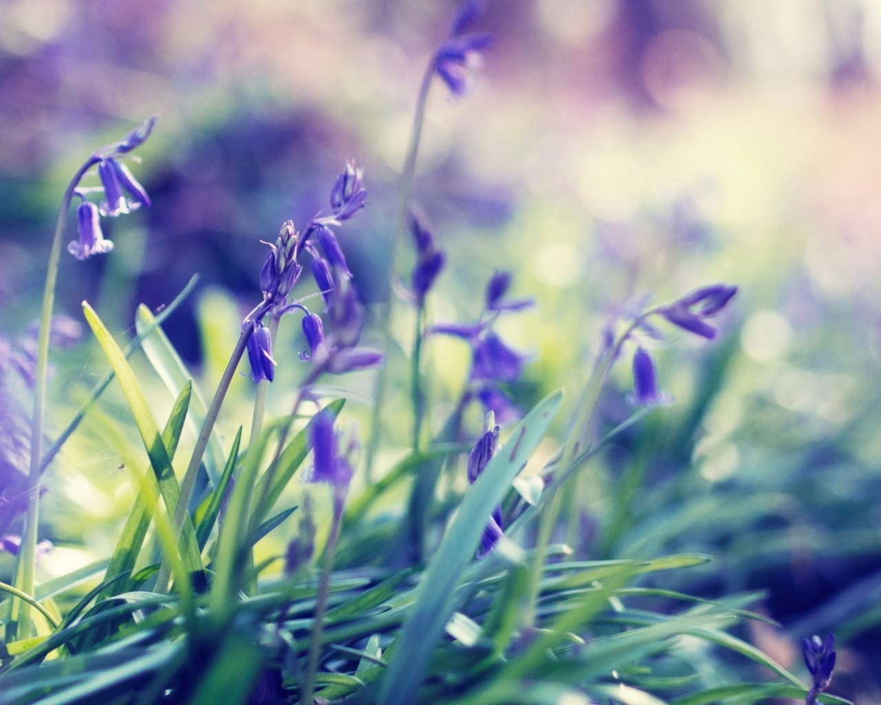 1280x1024 purple spring flowers desktop pc and mac wallpaper mightylinksfo