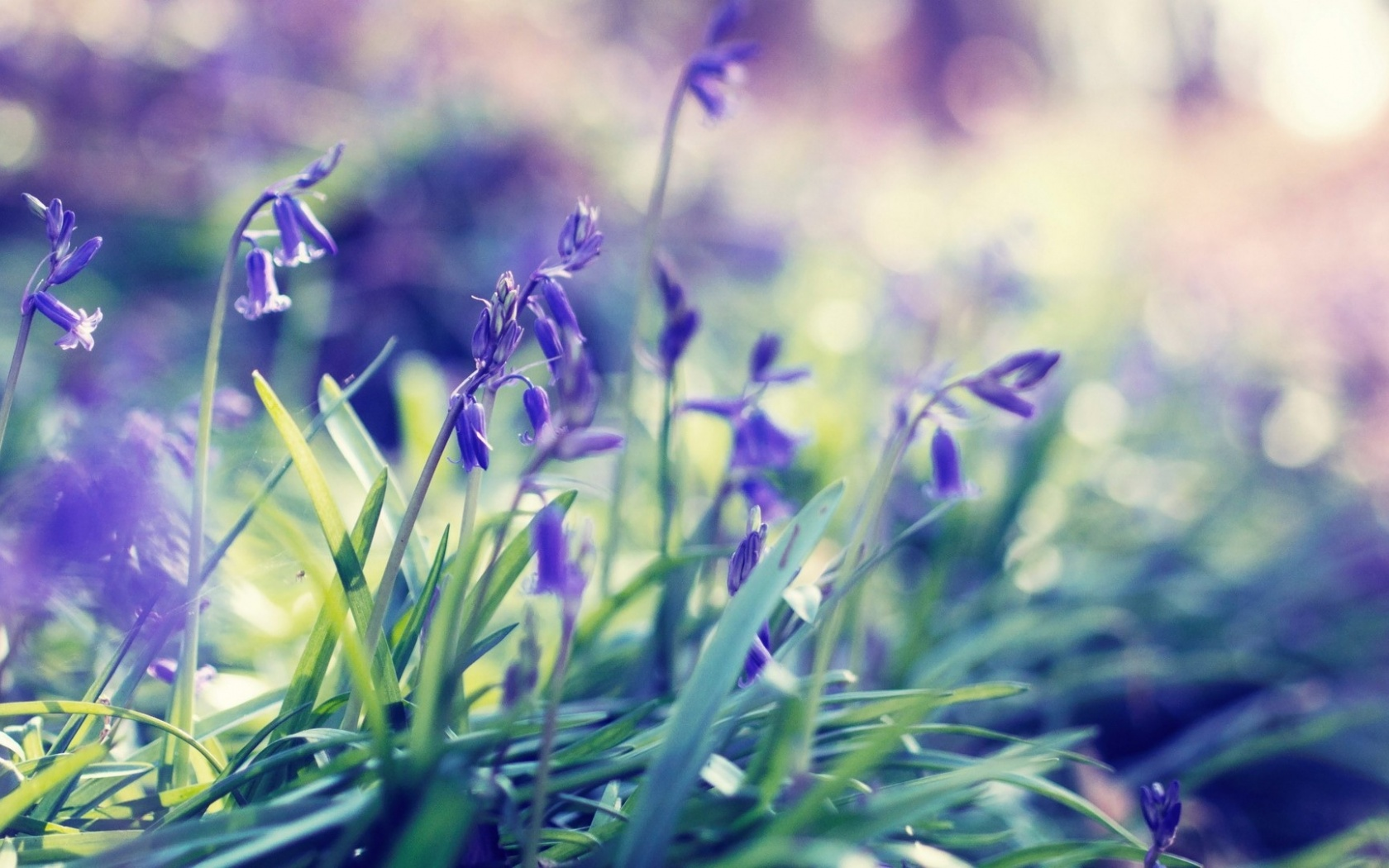 1500x500 Purple Spring Flowers Twitter Header Photo