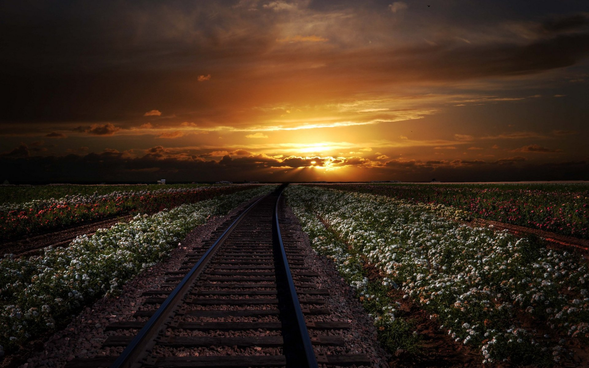 rail road white flowers sunset wallpapers