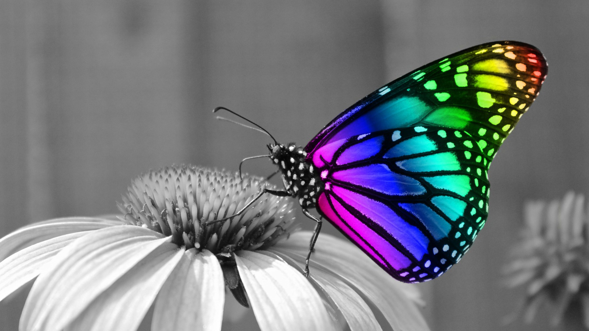 download wallpaper multicolored butterflies -#main